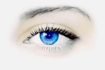 Fakta tentang alis mata
