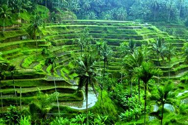 32 Tempat Wisata Terkenal di Bali dan Selalu Ramai Dikunjungi Oleh Turis Asing Maupun Lokal