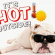The Cautions of Exposing Your Pet to Excessive Heat
