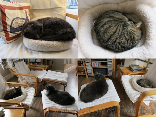 Large and small cat beds
