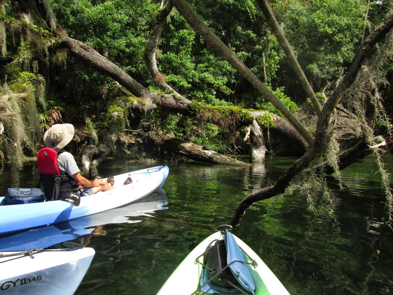 Guided Kayak Trips in Orlando