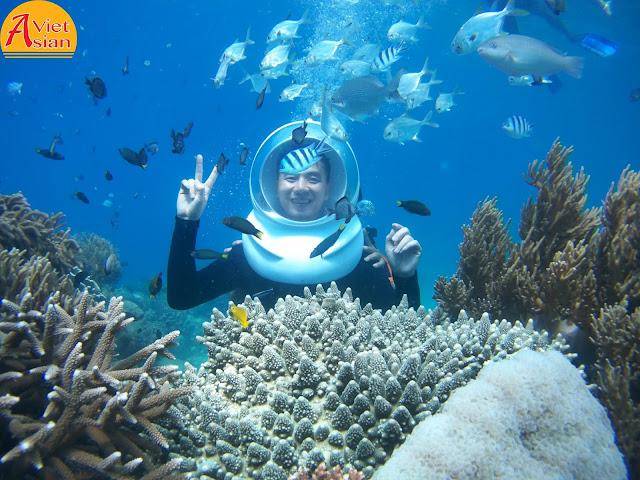 Tour Đi Bộ Dưới Biển 8