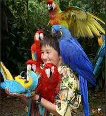 Burung Beo Macaw