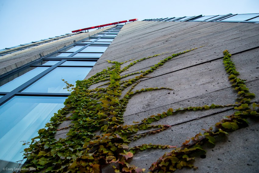 Portland, Maine USA November 2016 photo by Corey Templeton. Vines growing up a side of the The Westin Portland Harborview Hotel (formerly the Eastland) off of High Street.