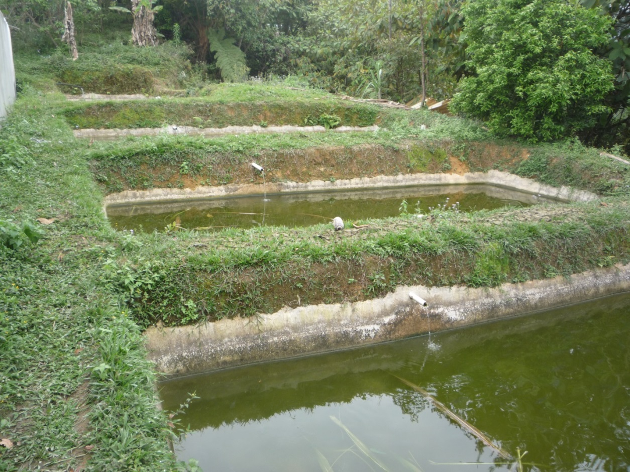 Del campo de la chinantla al plato nuestros animales for Construccion de estanques circulares para tilapia