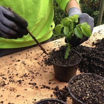 Livre du mois : Boutures, semis et greffes : Plante par plante, gestepar geste
