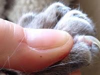 Cara Memotong Kuku Kucing yang Baik dan Benar