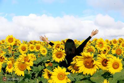 Hoa hướng dương đẹp nhất thế giới 3