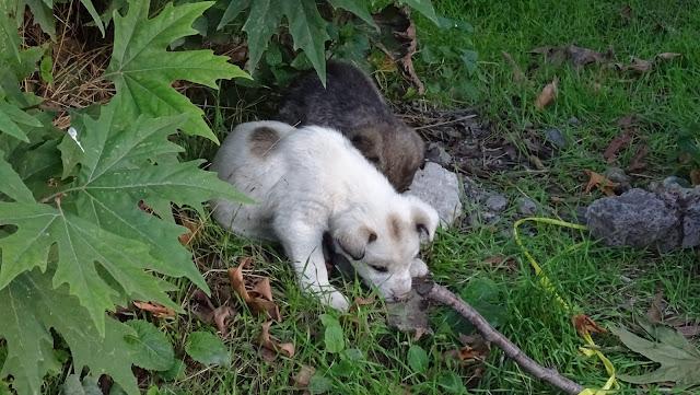 Klimakiller Hund: CO2-Ausstoß und Klimabedrohung