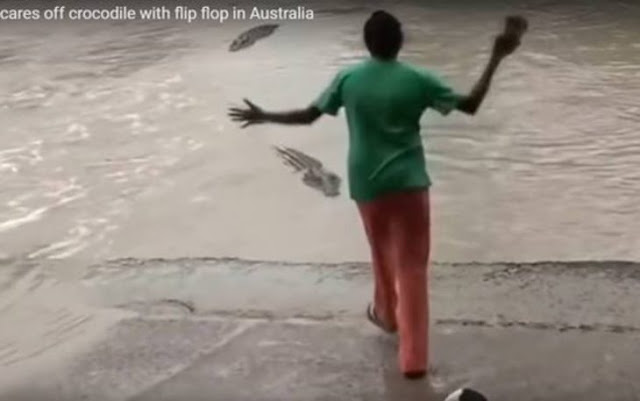 Mujer ahuyenta a salvaje cocodrilo con una chancla