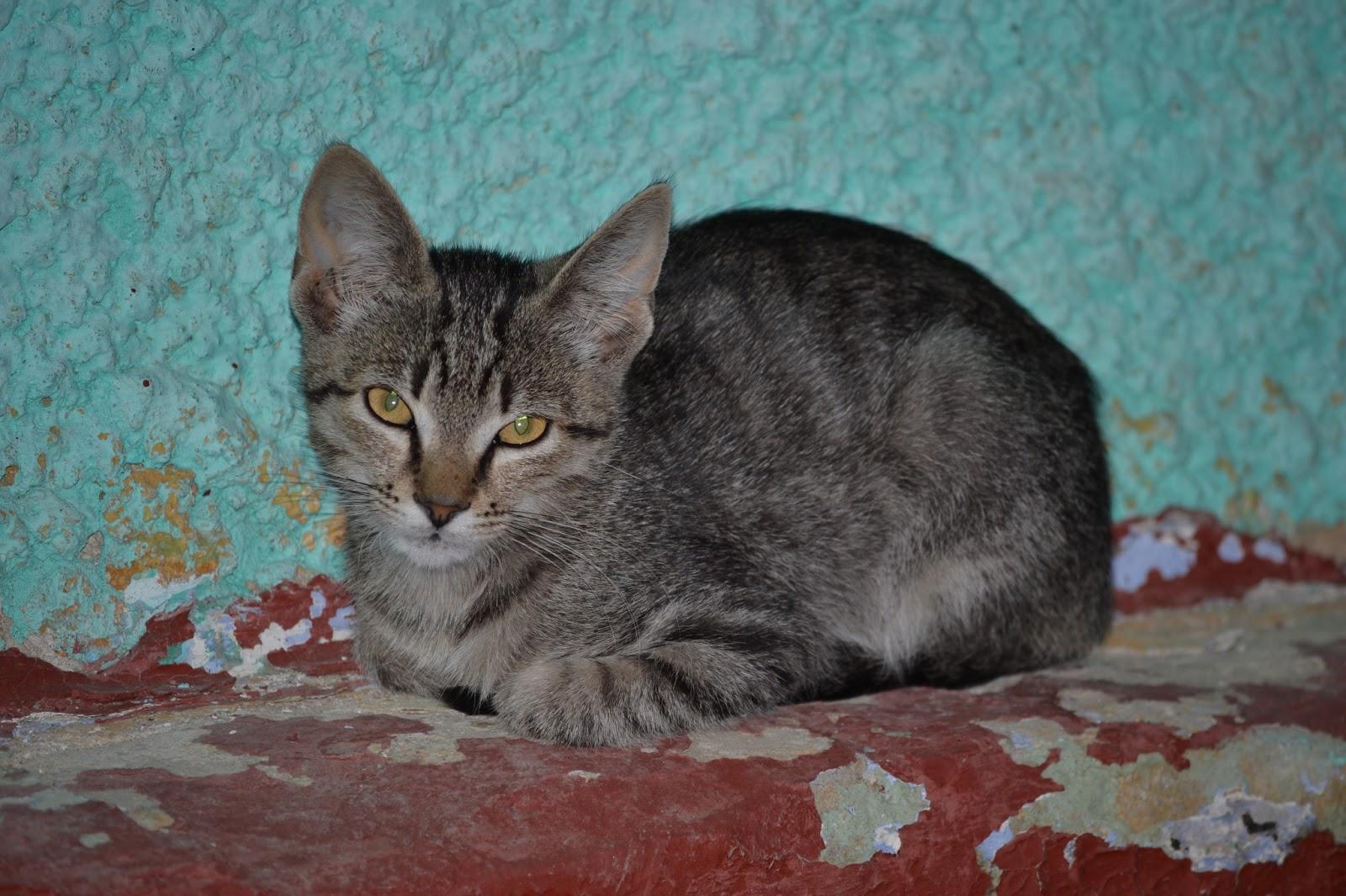 Bunutzas blog: Poze cu pisici