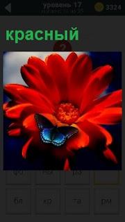 Цветок красного цвета с бабочкой которая приземлилась сверху на лепестке