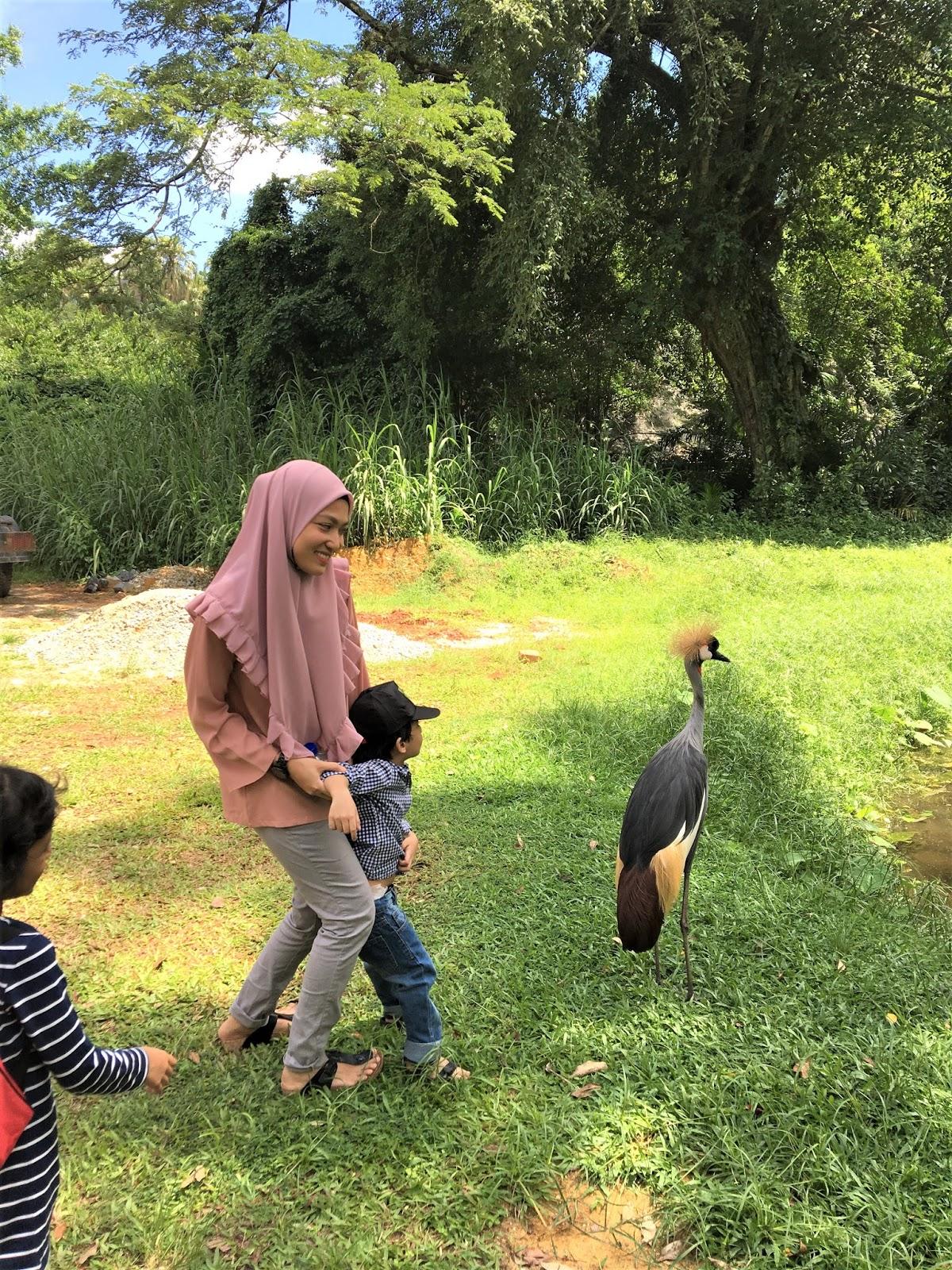 Wajib Pergi Zoo Taiping Tiap Kali Balik Raya Perak