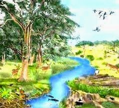 Pengertian Ekologi, Ayo tebak apa itu Ekologi ?...