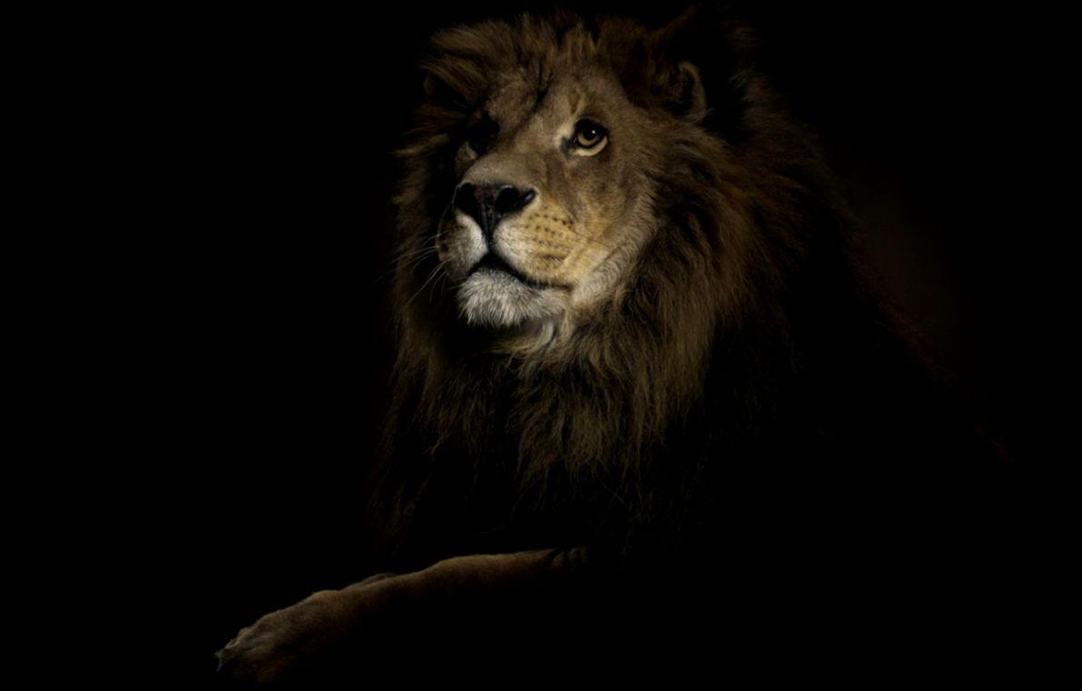 Lion King Dark Desktop Wallpaper Wallpapers Quality