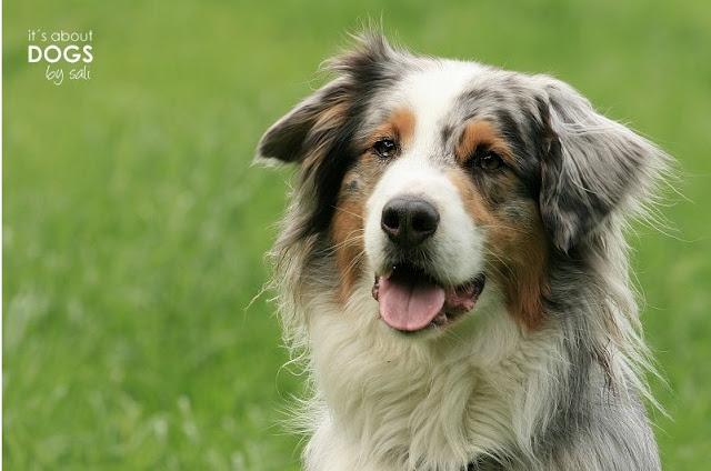 Tibet Terrier Sammy ist der Beweis, dass auch Hunde mit ihrer Gesichtsmimik lachen können.