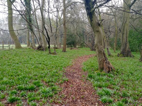 Photograph of Lamer Wood. Image by Hertfordshire Walker released under Creative Commons BY-NC-SA 4.0