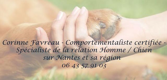 http://comportementalistecaninnantes.blogspot.fr/