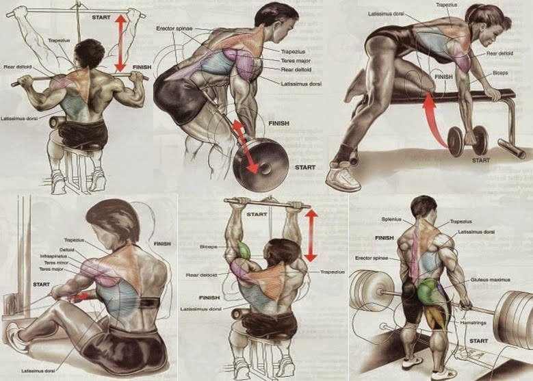 Beginner bodybuilders – Back exercises for mass - all ...