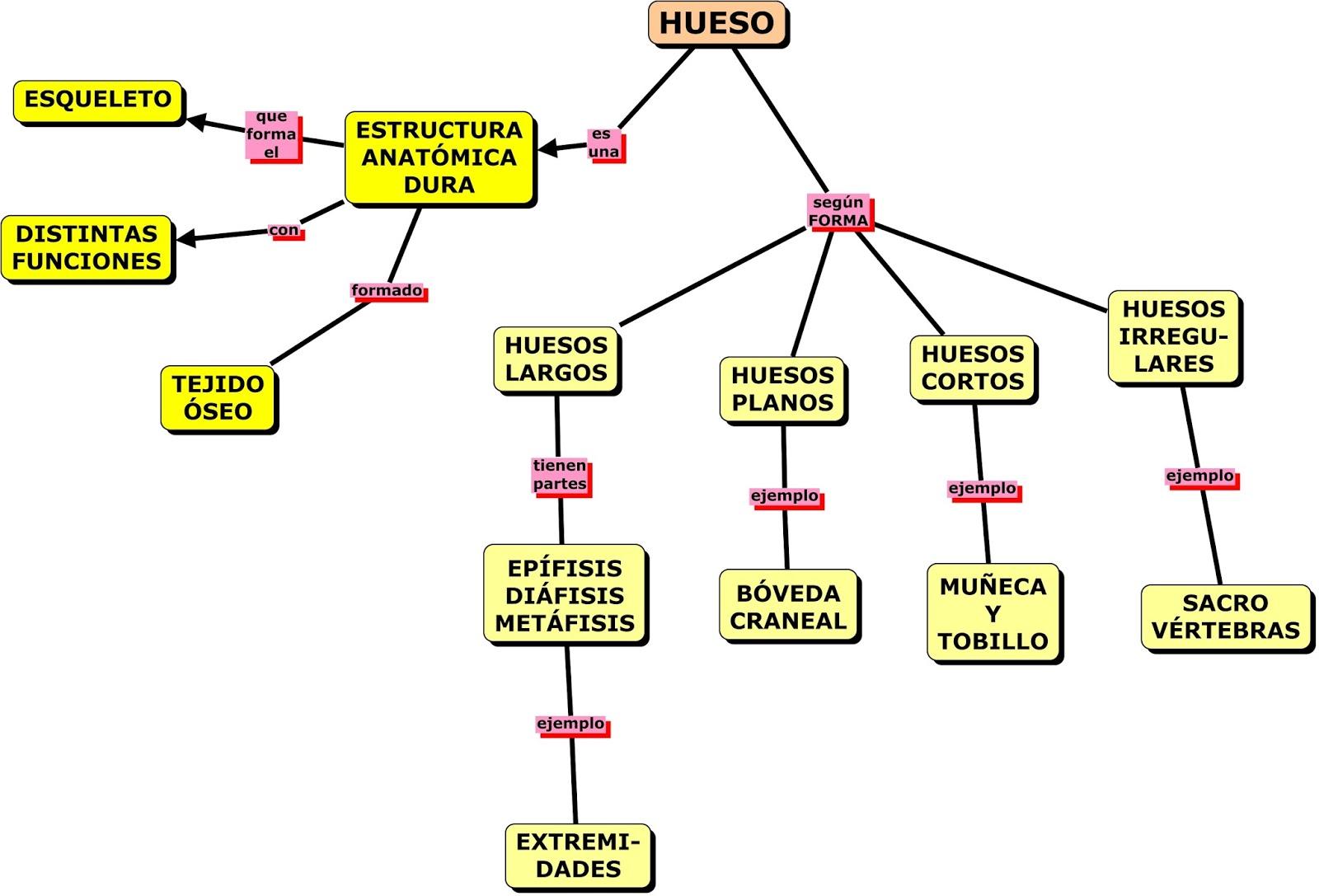 HUESO Y TEJIDO ÓSEO EN MAPAS CONCEPTUALES | MAPAS CONCEPTUALES (MIND ...