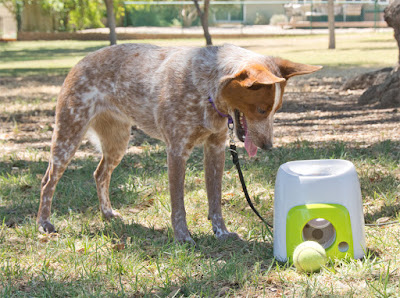 Interactive fetch and treat dog game