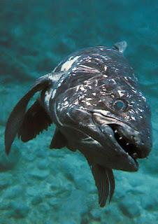 http://pirateonepiece.blogspot.com/2010/11/marine-king-neptune-nepuchun.html