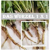 http://wegeinsich.blogspot.co.at/p/blog-page_5.html