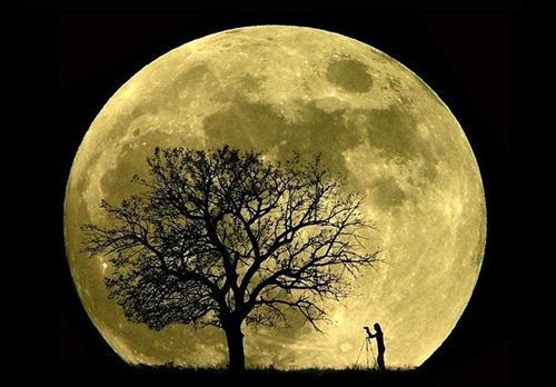 La influencia de la luna en las plantas para que crezcan mejor