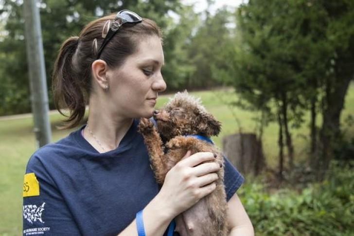 σκυλίτσα διάσωση ζώων