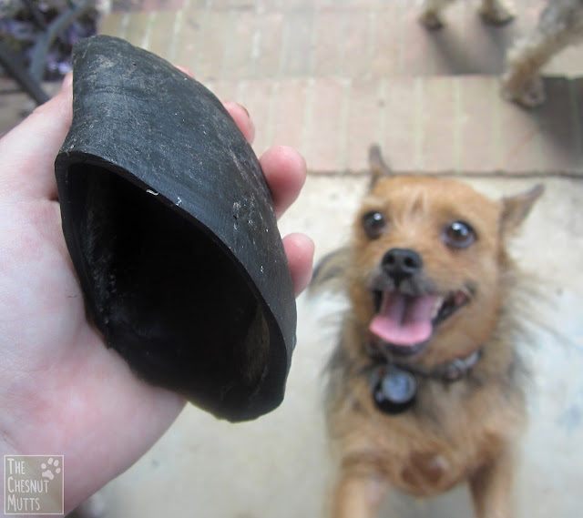 Jones Natural Chews cow hoof