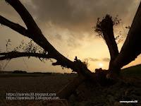 流木のある風景(写真)