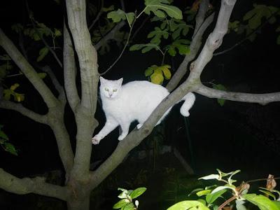 Risultati immagini per paolo d'arpini con gatto