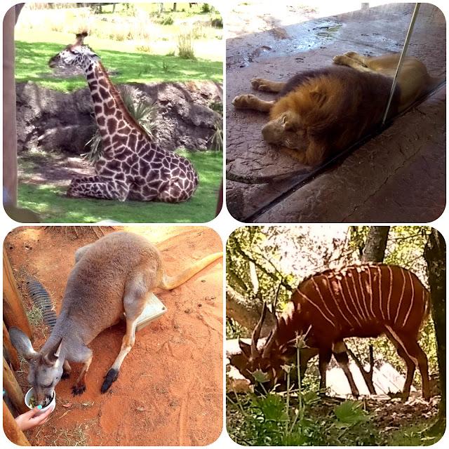 Animais do Busch Gardens