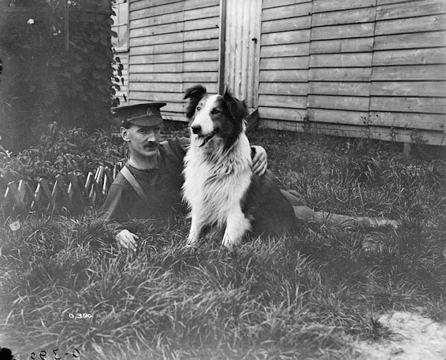 July 1916 - Dog mascot of the No. 10 Casualty Clearing Station with soldier (Linked)