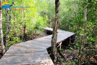 jalan tracking mangrove karimunjawa
