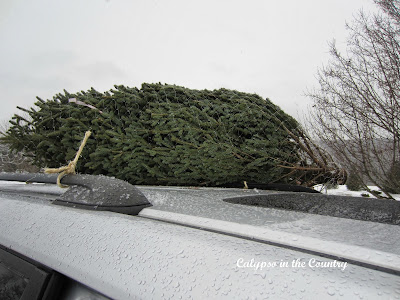 Real Christmas tree on car