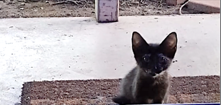 Women open the front door, but then looks down and sees a stray kitten begging for someone to save her