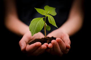 Resultado de imagem para com planta na mão