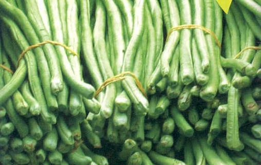 Manfaat Kacang Panjang: Panjang Bentuknya, Panjang Manfaatnya