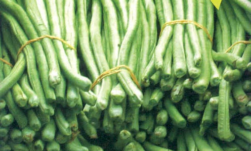 Manfaat Kacang Panjang : Kandungan dan Informasi Lengkap Kacang Panjang