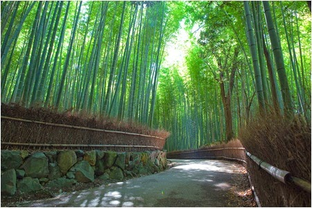 ป่าไผ่ซากาโนะ (Sagano Bamboo Forest)