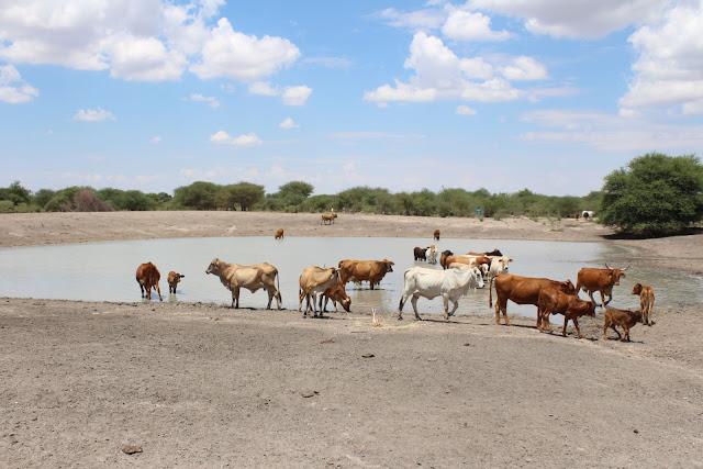 छह वर्षों में कृषि ने सबसे खराब तिमाही परिणाम दर्ज किए