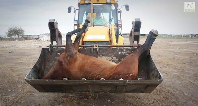 Lo que esconde El Rocio: Maltrato y muerte de animales por agotamiento