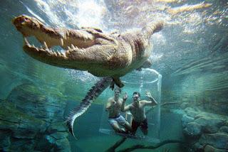 berenang gaya bebas