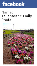Tallahassee Daily Photo on Facebook