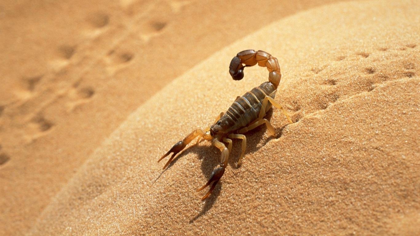 Escorpiões | Scorpiones