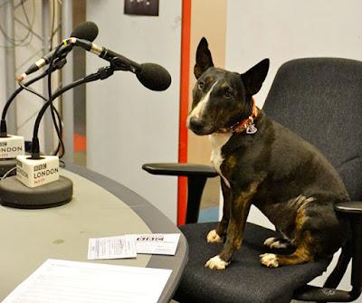 Perro con microfono