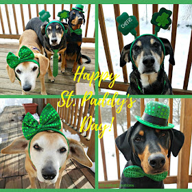 rescue dogs st patricks day dressed up puppy