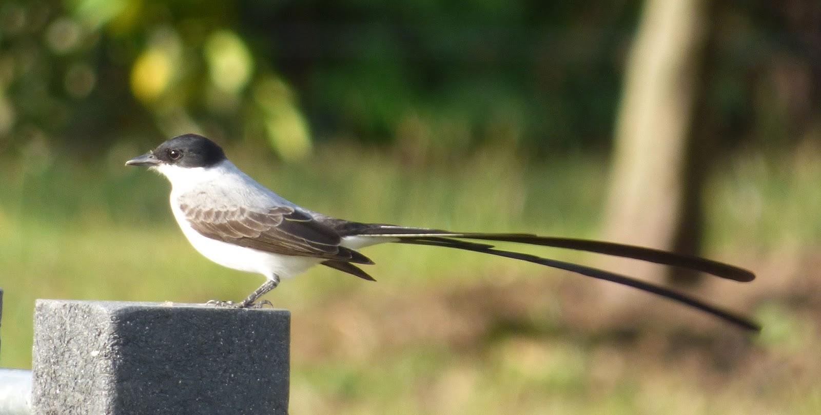 birds on the brain happy new year backyard birding in colombia
