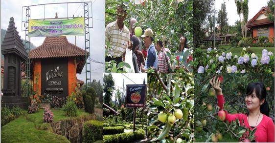 Kusuma Agrowisata Petik Apel